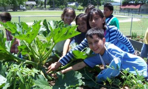 SFC Sprouting Healthy Kids Project in school garden